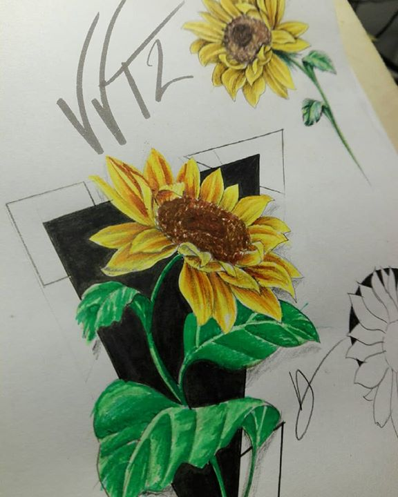Sunflower's Sketch  …